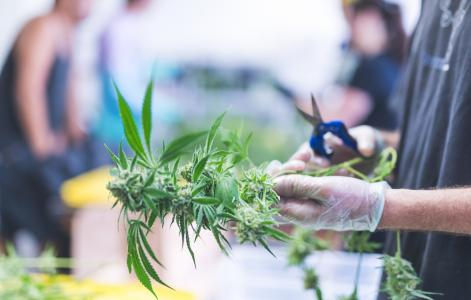 Veterans in the legal weed industry face barriers to housing benefits