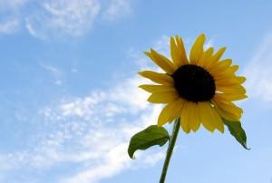 summer-home-selling-tips-homeselling-hot-weather-strategies-real-estate-season-summer