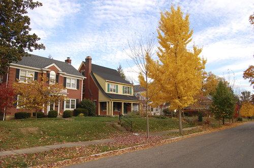 rsz_fall_trees-_houses